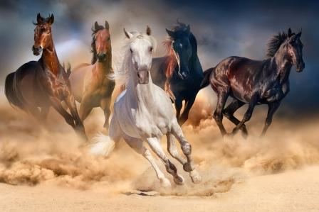 paardbeeldsonjaklein