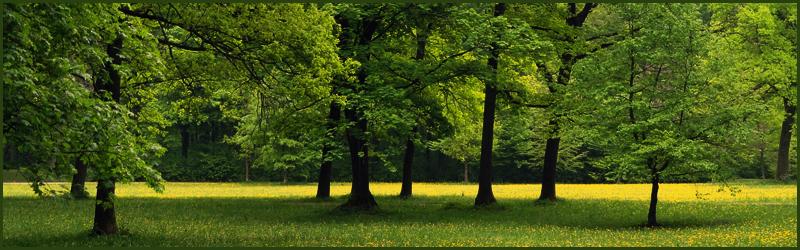 Spiritualiteit en bomen