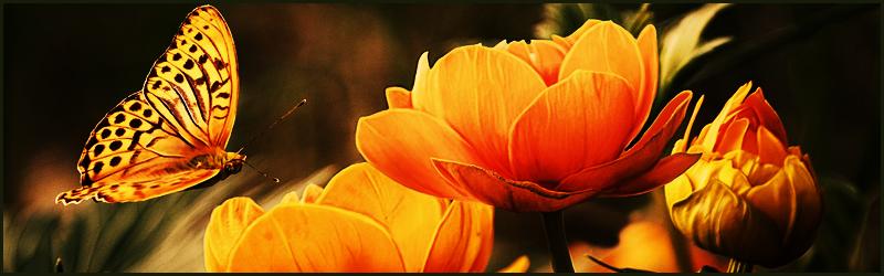 Wat de bloemen jou vertellen